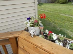 Geraniums and petunias.